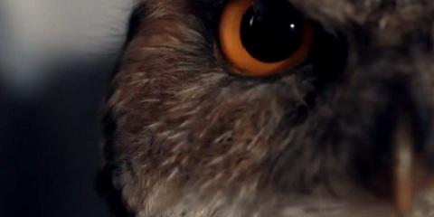 Curxes Owl Chum